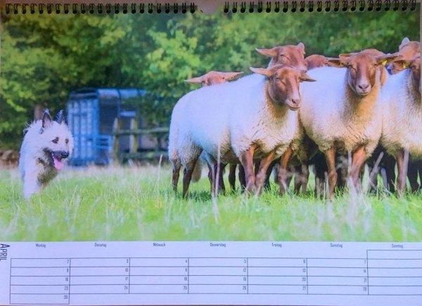 calendargirl-noki